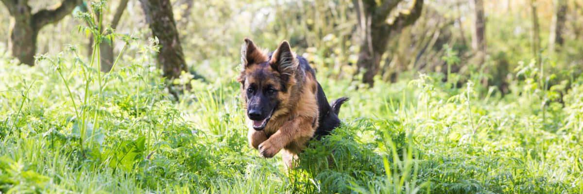 ecostyle-hondenvoer