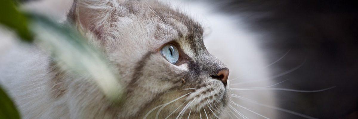 kat borstels