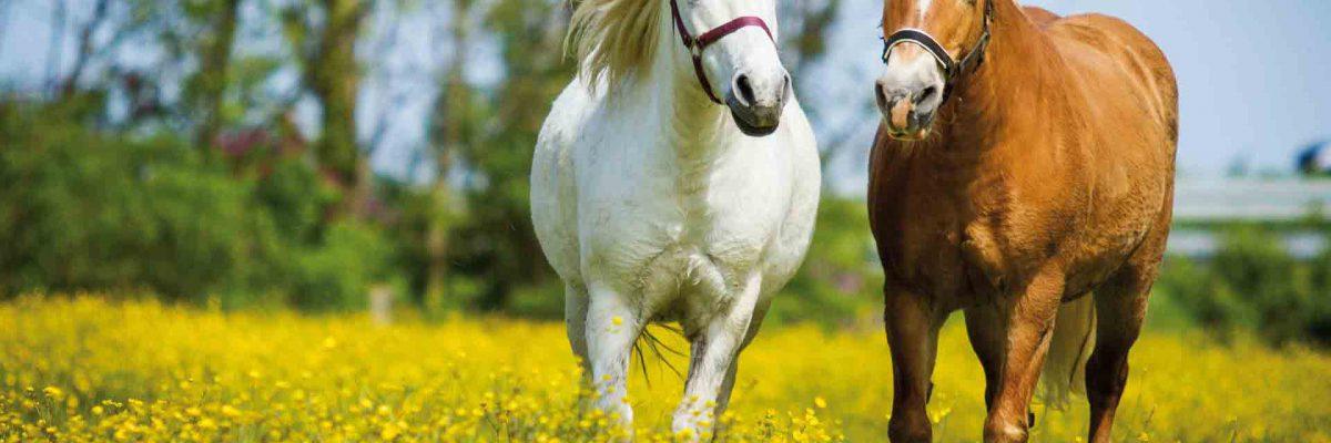 paarden-voer-2