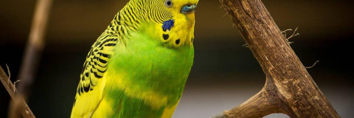 tropische-vogels
