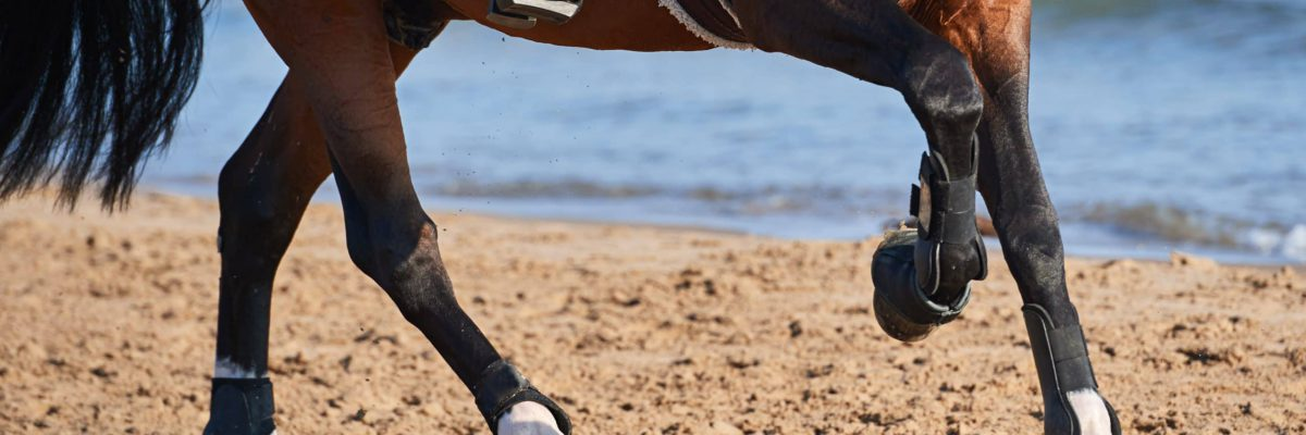 voedingssupplementen-paard